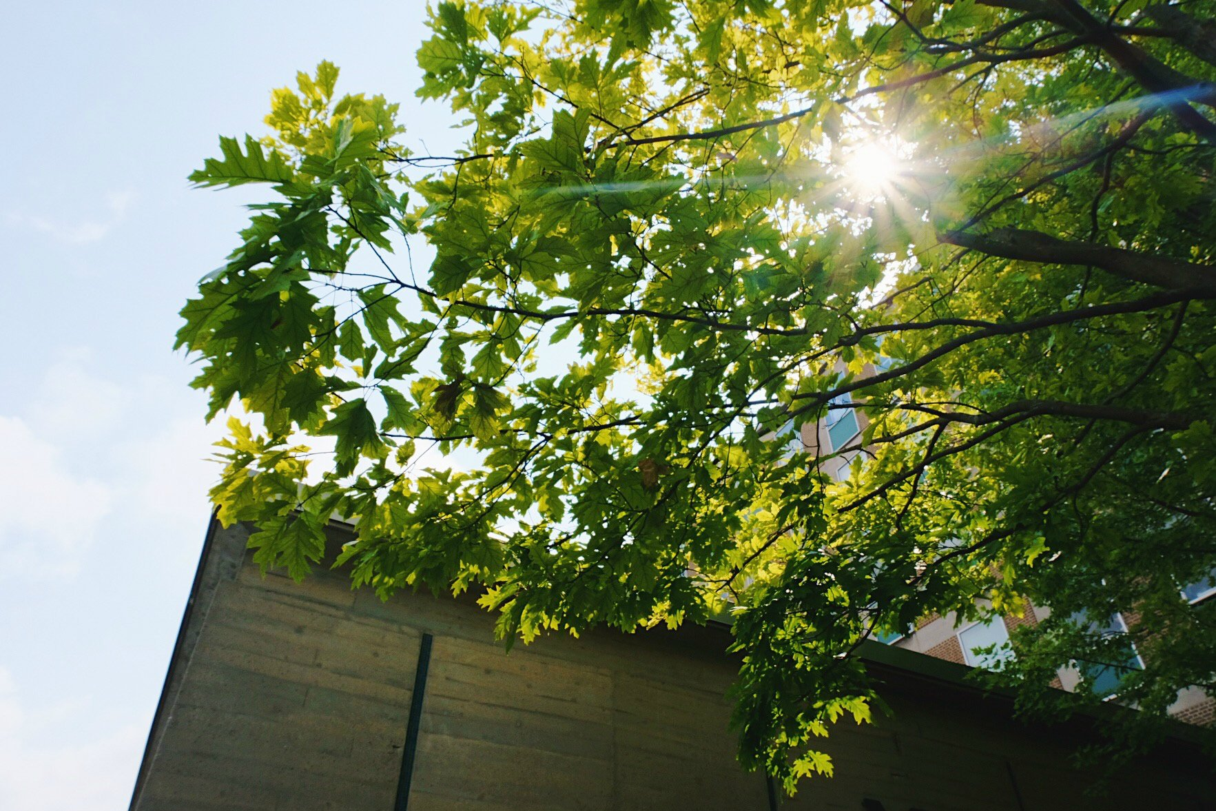 Photo looking up at leaves and a building
