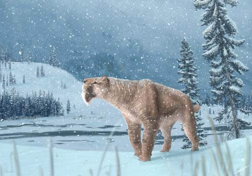 Canadian Smilodon.