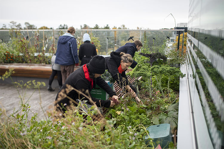 """Students gardening in the """"living lab"""""""