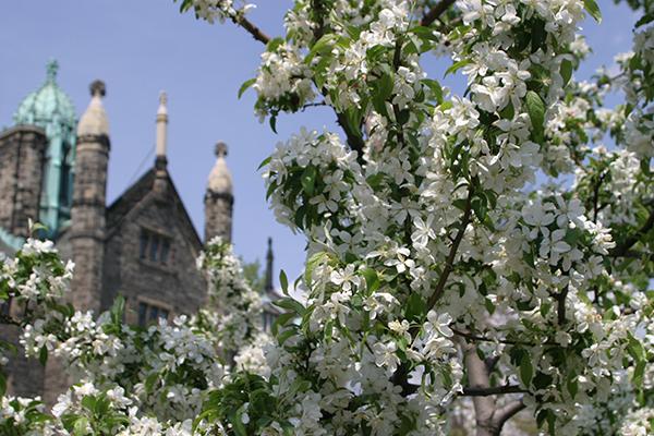 Spring Flowers in St George campus