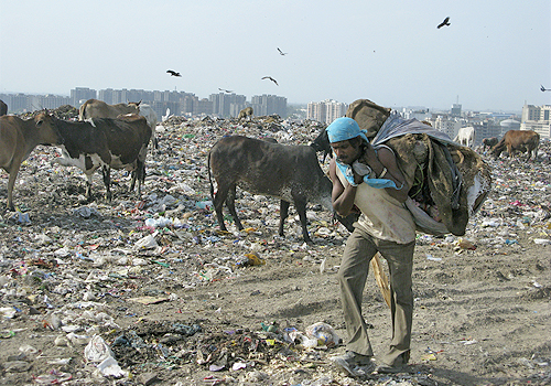 A man hauls a large pile of waste on his back while livestock graze on garbage behind him