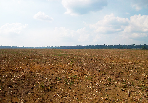 A large dry field on a sunny day.