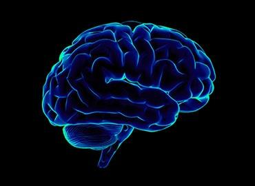A blue outline of a brain with a black background.