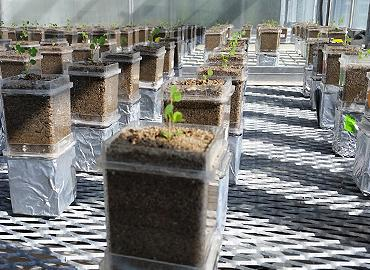 A room with boxes of planters and little plants growing.