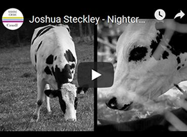 A freeze-frame from Joshua Steckley's video, including cows filmed in black-and-white